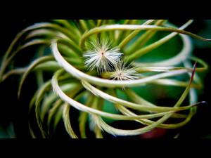creepy plant